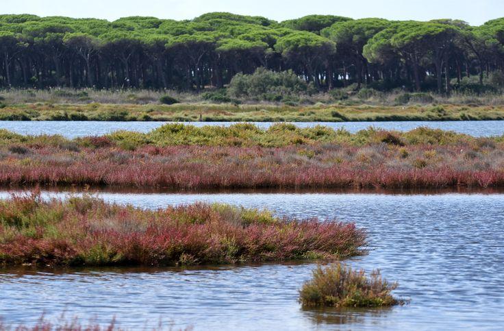Salicornia #guidofrilli - f/8 1/2500 sec. ISO 100 - 150 mm. -- Nikon D750 + Tamron 160/500 mm - Stagno S'Ena Arrubia (OR)