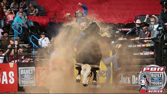 Professional Bull Riders - Berger: 'Pearl Harbor is the bull to beat' By: Justin Felisko January 23, 2017. Pearl Harbor's 46.25-point bull score was a career-best. All Barbosa could muster to say was, 'Wow,' after being rocked by Pearl Harbor in 3.65 seconds amidst a dust bowl Sunday afternoon during the Built Ford Tough Championship Round. This score was Pearl Harbor's personal best.