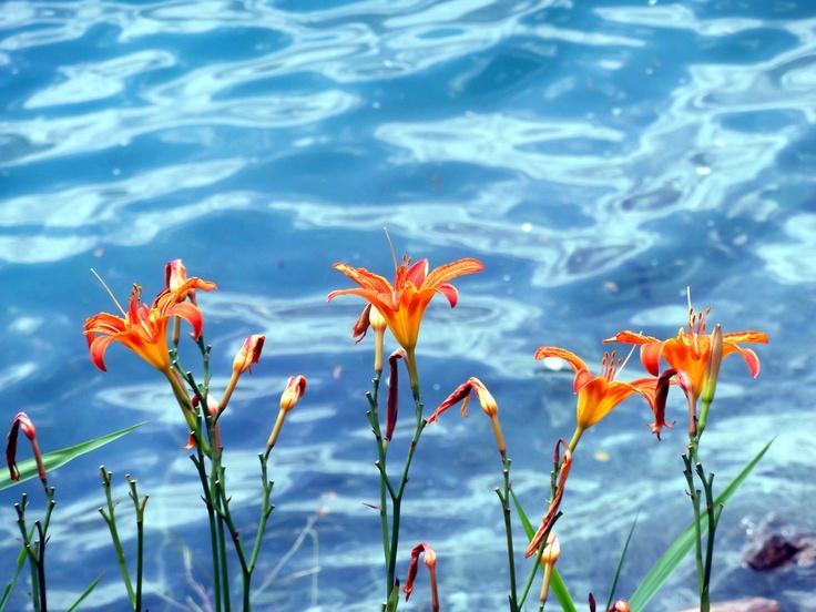 Flowers at Ledro Lake.