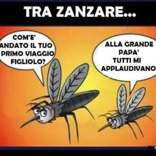 zanzare!!