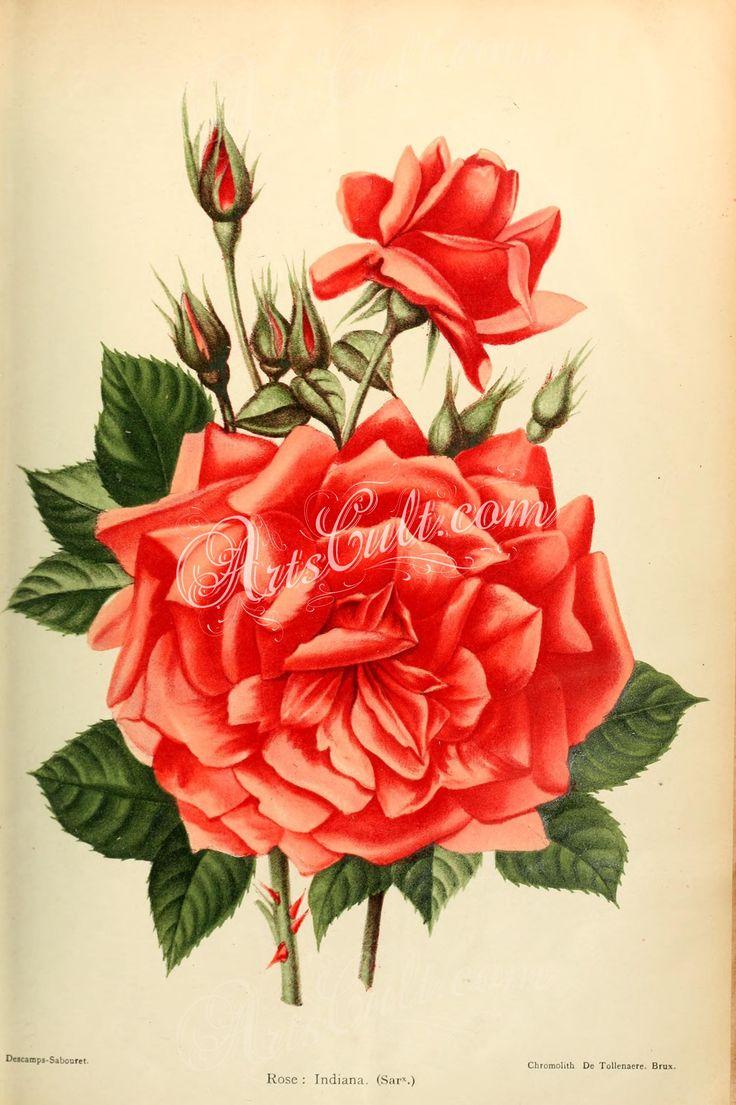 схема росписи сложной розы