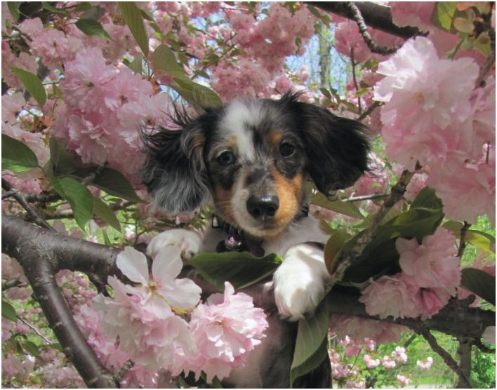 Winners of Springtime Dogs Photo Contest Revealed - Fidose of Reality