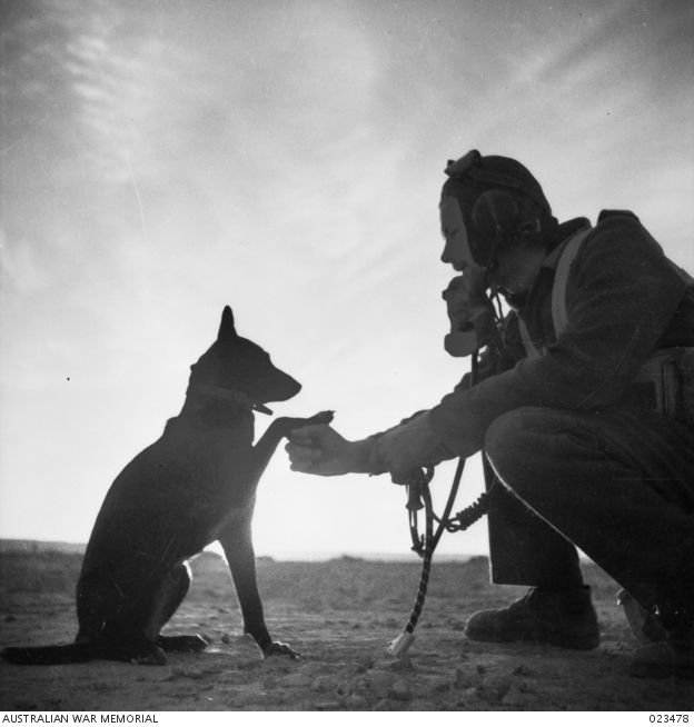 Libya. 1942-01. Flying officer L. Spence with a dog which attached itself to No. 3 Squadron, RAAF