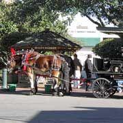 Savannah Visitor's Center website