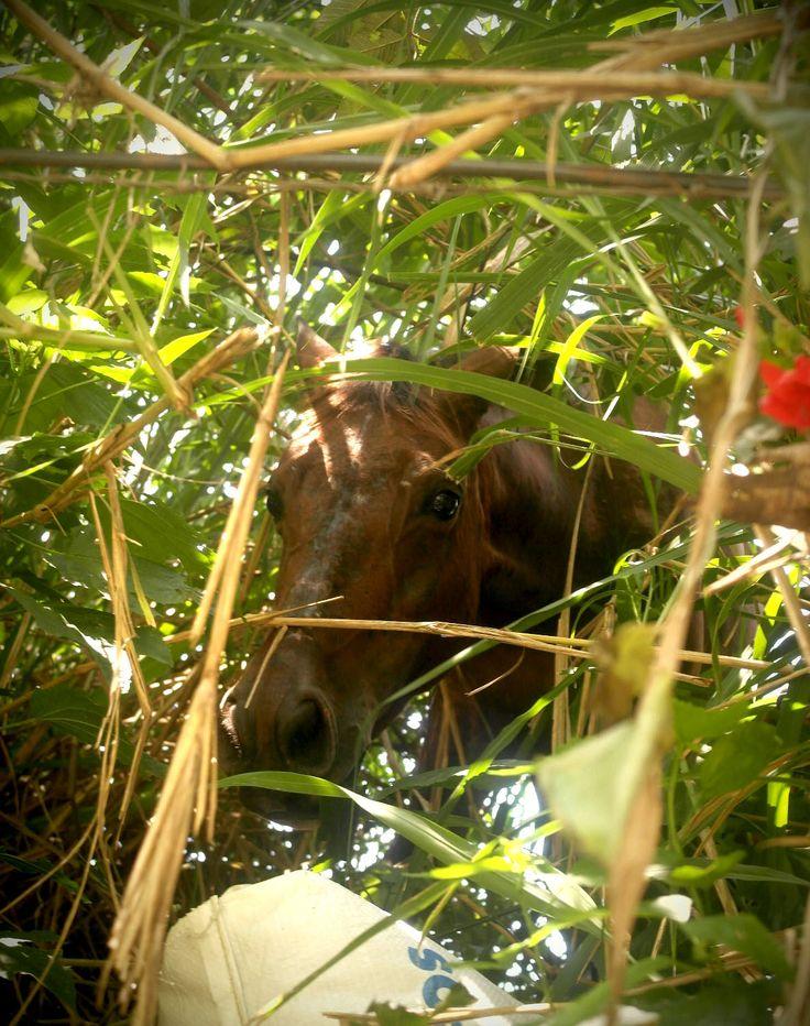 #horse #medellin
