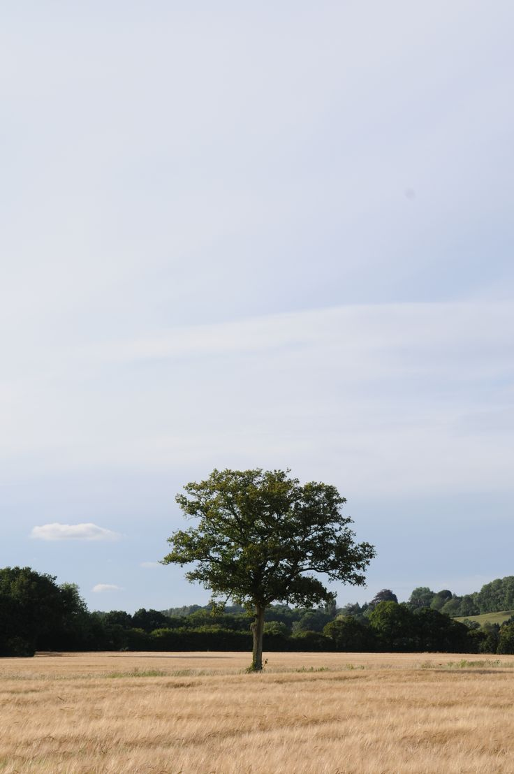 Our favourite lonely tree.
