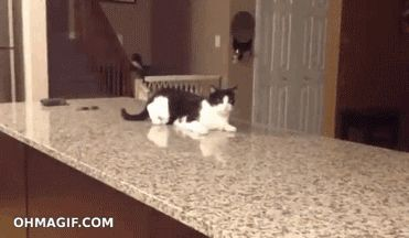 Cat walks on counter, kind of http://sulia.com/channel/cats/f/59c269f9-316d-4a0a-9451-26c8b4d53d1f/?source=pin&action=share&btn=small&form_factor=desktop&pinner=125878143