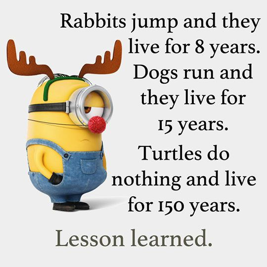 Lesson Learned funny quotes quote funny quote funny quotes funny sayings lazy humor minions funny pictures minion quotes