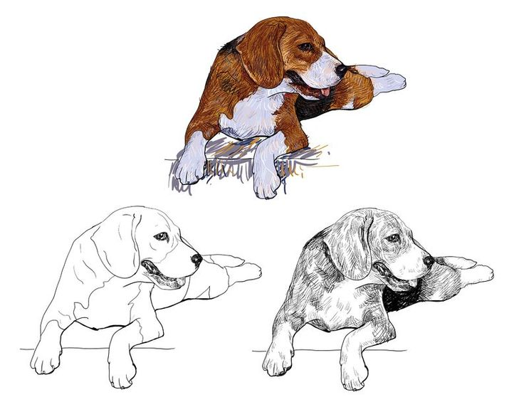 How To Draw Short Fur On A Dog | www.drawing-made-easy.com | #short #dog