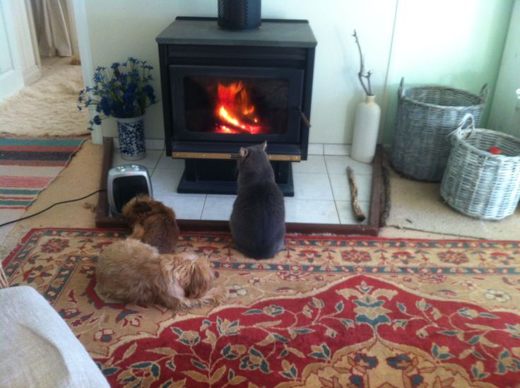 Cosy in front of the fire