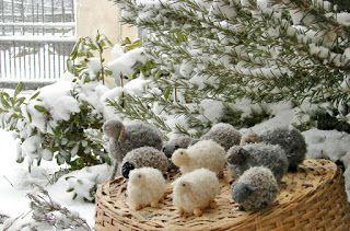 Bambole waldorf di stoffa - waldorf dolls : Pecore di lana fatte a uncinetto - giocattoli