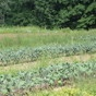 Rockland County, NY Farm tour...check it out!