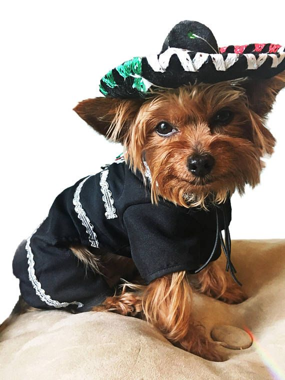 307d15ca009 Premium Mariachi Dog Costume   Mariachi Outfit for dogs  Mexican dog ...