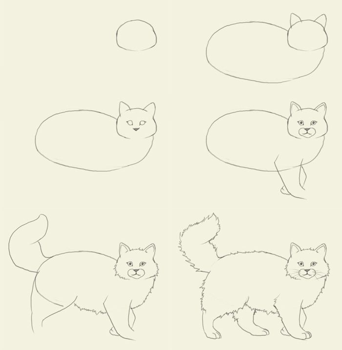 Funny cats: how to draw a cat