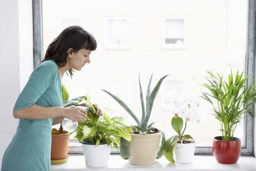 Huonekasveista on tullut loistava sisustuselementti. Ne näyttävät kivoilta ja antavat väriä, ja lisäksi puhdistavat ilmaa.