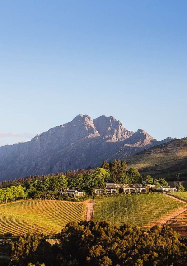 A trip to the western Cape, Africa is not complete without a relaxing journey through the Winelands. Take a day and go on a wine tour around some of the best vineyards in the world. Timbuktu Travel.