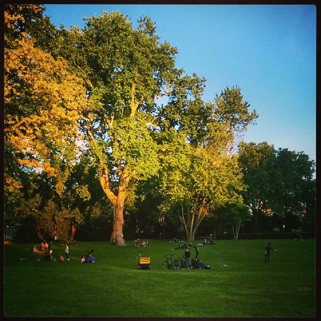 Frühlingsgefühle - Grün ist der Frieden des heutigen Abends #picoftheday #germany #hessen #darmstadt #innenstadt #herrngarten #park #parkanlage #wiese #gras #grün #bäume #pflanzen #menschen #freizeit #picknick #sport #frühling #sonne #sonnenuntergang  (hier: Herrngarten)