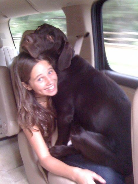 My chocolate lab loves sitting in our laps. She honestly thinks she