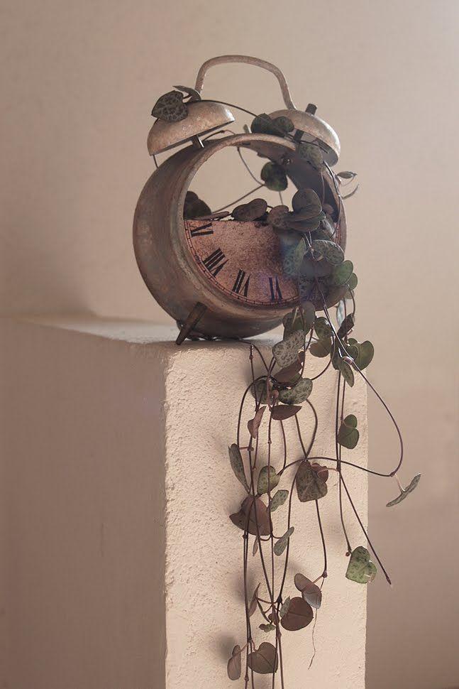 miramira : DIY - Reloj no marques las horas #DIY #reloj #alarm #clock #plantas #plants #handmade