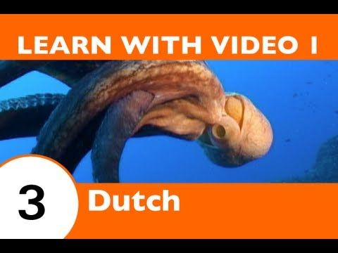 Learn Dutch with Video - DutchPod101 Will Help Keep You Afloat with Dutch Marine Life Vocabulary! - YouTube