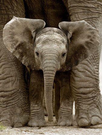Elephants are people