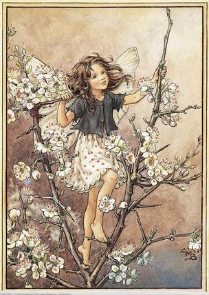 The Blackthorn Fairy ~ Flower Fairies. I so love all the Flower Fairies - happy childhood memories