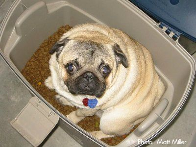 Not all pet food containers and dog food dispensers are safe. Here's how to pick the best pet food storage containers and ensure your premium dog food stays fresh ...