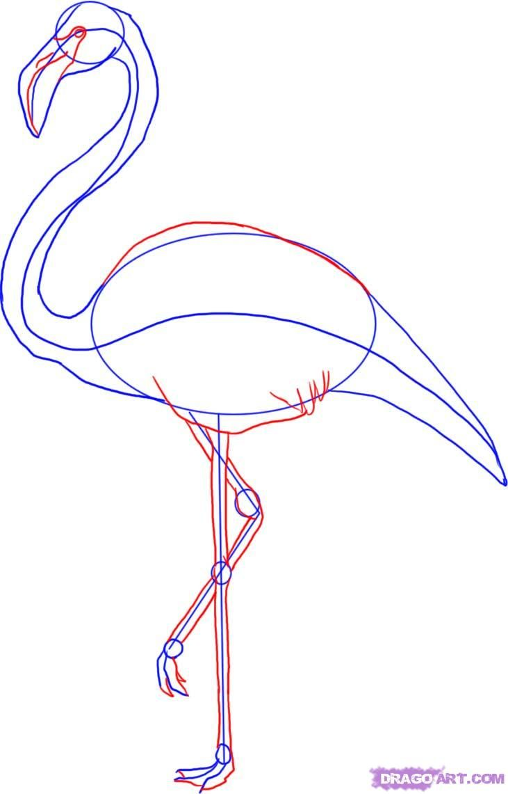 How to Draw a Flamingo                                                                                                                                                                                 More