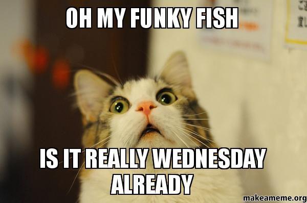 53 best Wednesday Memes images on Pinterest | Good morning ...