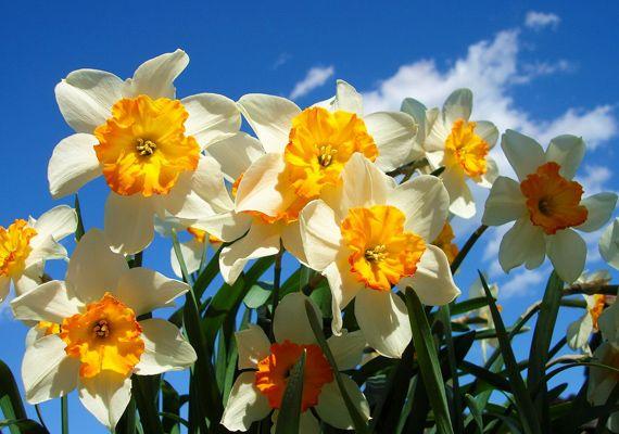 Töltsd le most! Gyönyörű virágok háttérképnek | femina.hu