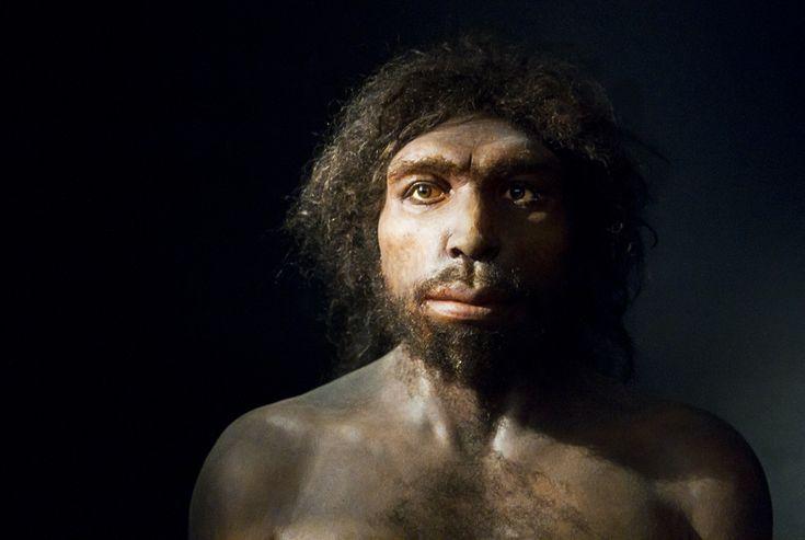 Homo antecessor es una especie extinta perteneciente al género Homo, considerada la especie homínida más antigua de Europa y probable ancestro de la línea Homo heidelbergensis - H. neanderthalensis. Vivió hace unos 900 000 años. Eran individuos altos, fuertes, con rostro de rasgos arcaicos y cerebro más pequeño que el del hombre actual, y con menos circunvoluciones cerebrales.La mayoría de individuos alcanzarían una altura de entre 160 y 185 centímetros, con un peso de entre 60 y 90…