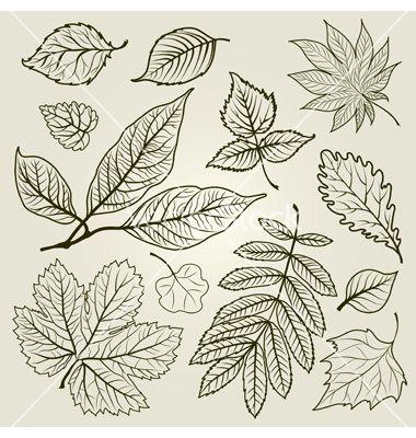 Autumn leaf design vector on VectorStock®