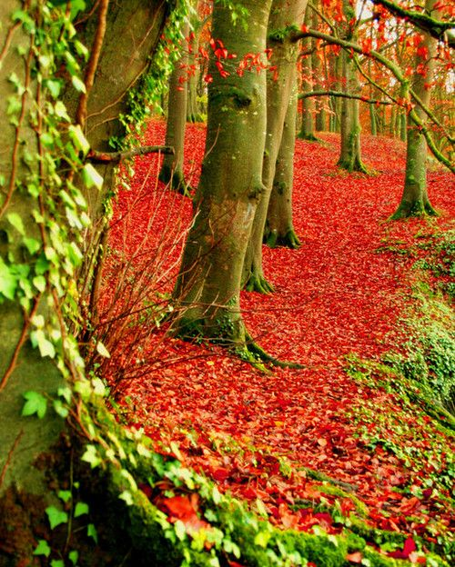 Incredible color! Red Forest in Dublin, Ireland