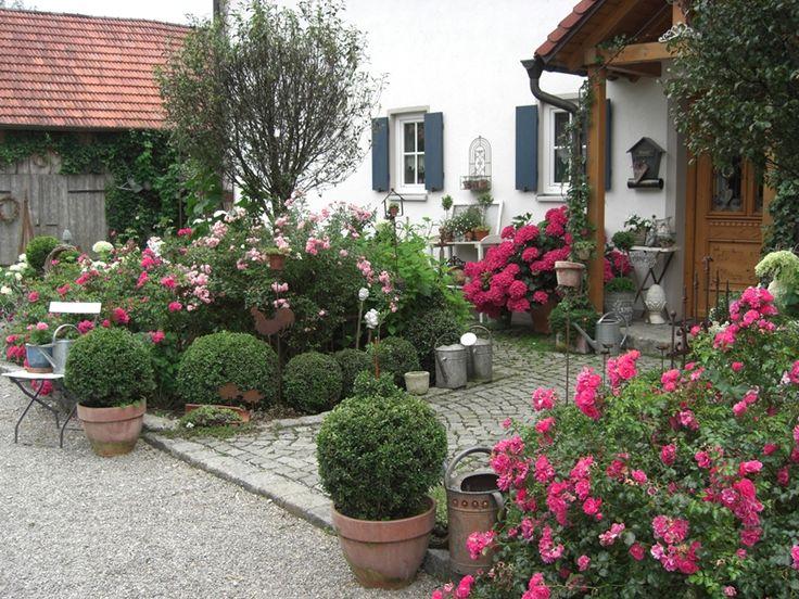 Rosen und Hortensien - Bilder und Fotos