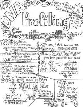 DNA Profiling STR Sketch Notes Doodle Notes W/Teacher's