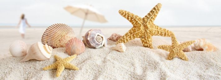 Searching for Seashells And Starfish On The Beach Facebook Covers? We got em.