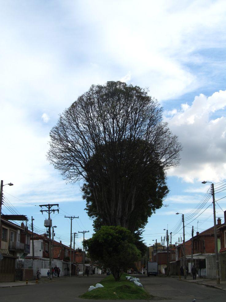 Arborización en la ciudad.