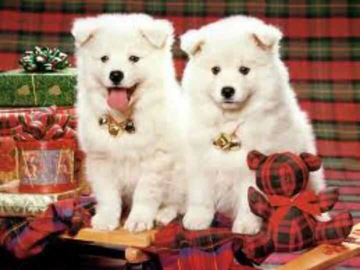 Näyttävätkö nämä koirat tutuilta? Samaiset veitikat tulevat VIPin mukana goSussa tässä kuussa.