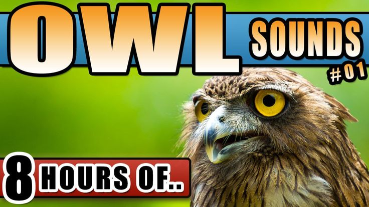 OWL SOUND EFFECT AT NIGHT, Owl Sounds Hoot relaxation, Sound of owl for ...