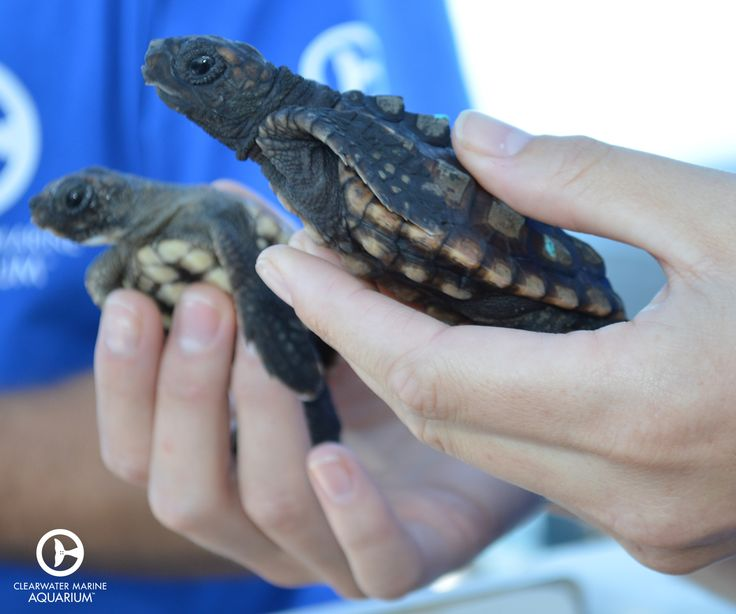 56 Best Images About Rescue Rehab And Release On