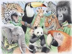 jungle dieren - Google zoeken