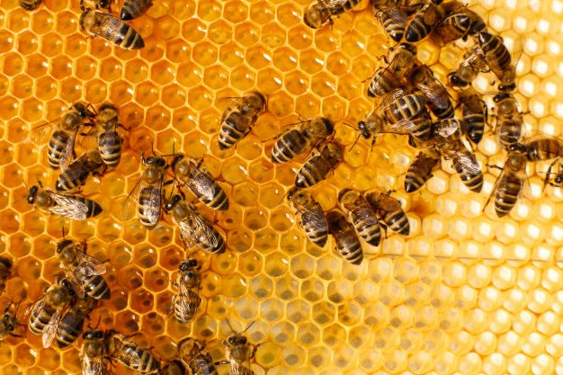 Close Up Honeycomb In Wooden Beehive With Bees On It Bee Hive Wooden Honeycomb
