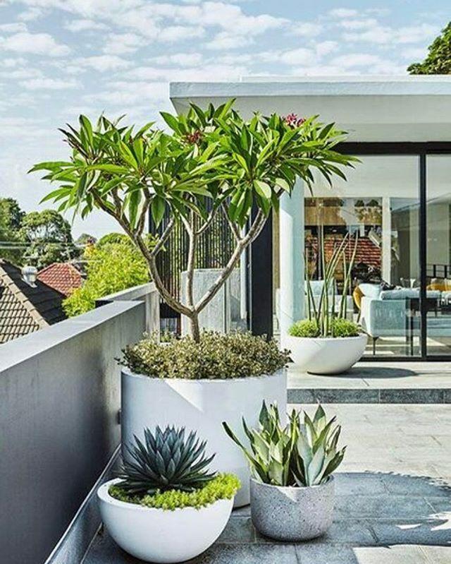 Sydney garden design, garden maintenance and horticultural services company