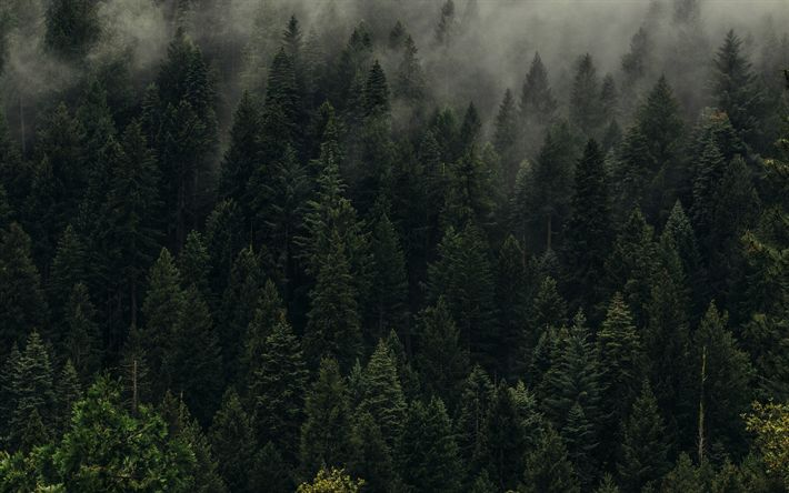 Download wallpapers green forest, fog, mountainside, green trees, Taiga, Russia