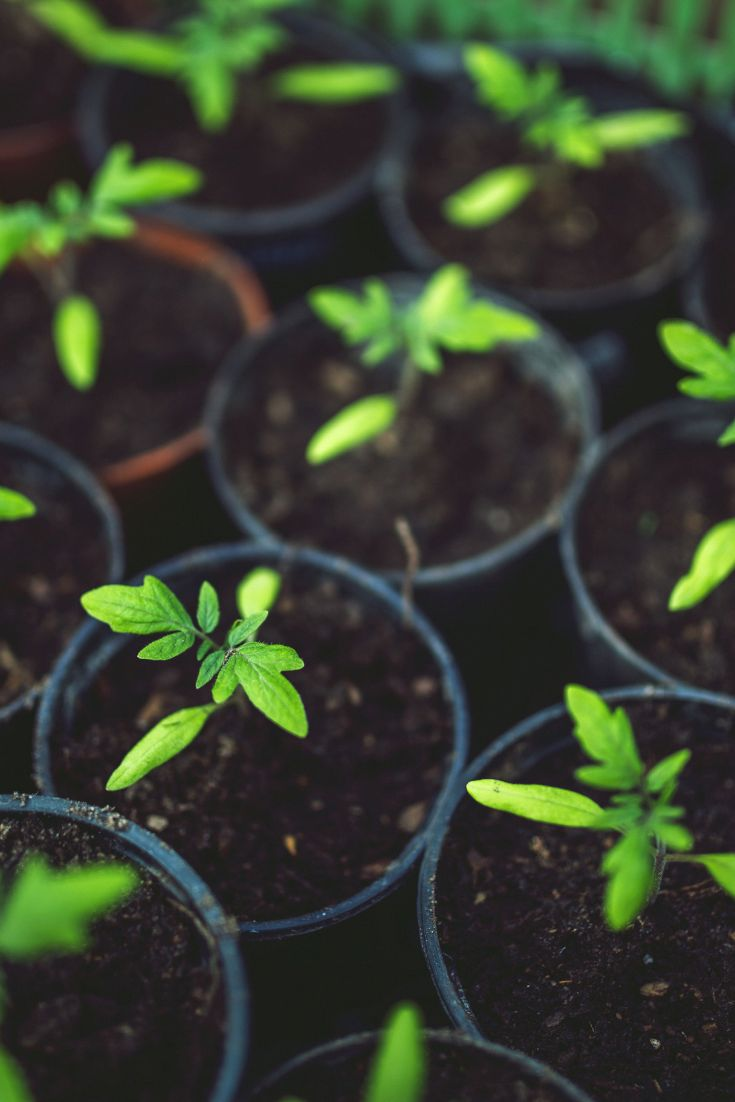 Seed Starting Made Simple #organicgardenhowto