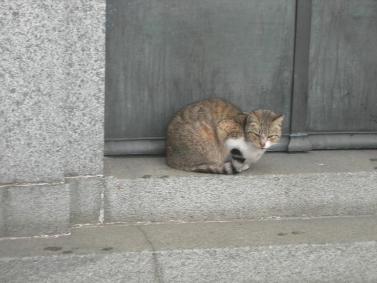 Recoleta, descanso de hombres, refugio de gatos.