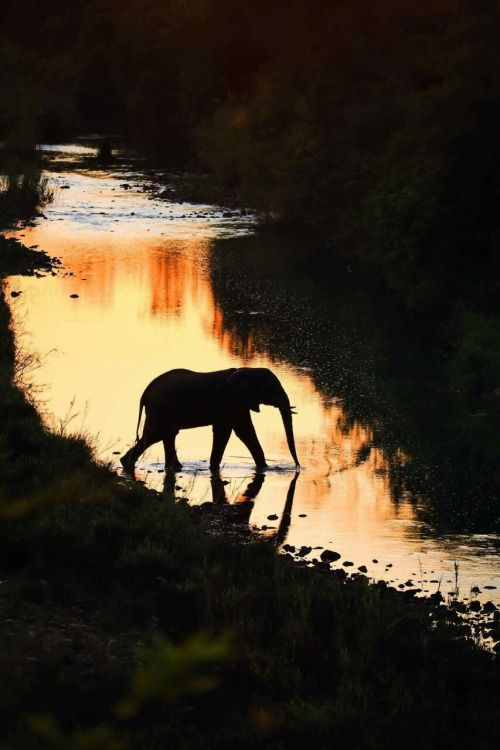 Elephant crossing the Mkuze River at dusk. Image by Heinrich…