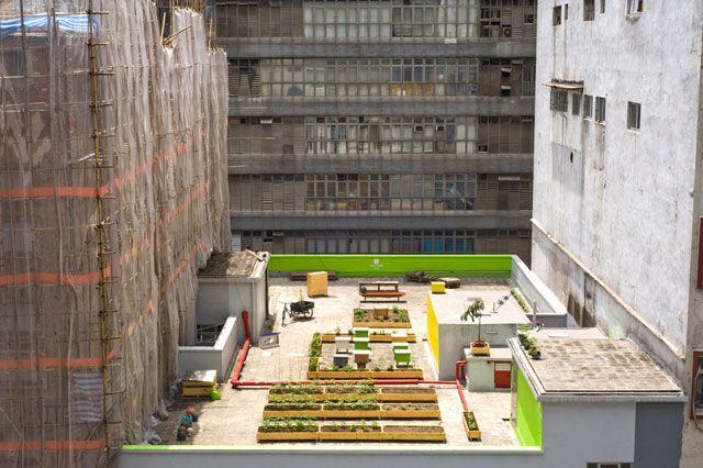 HK farming. Hongkong #Rooftop farming
