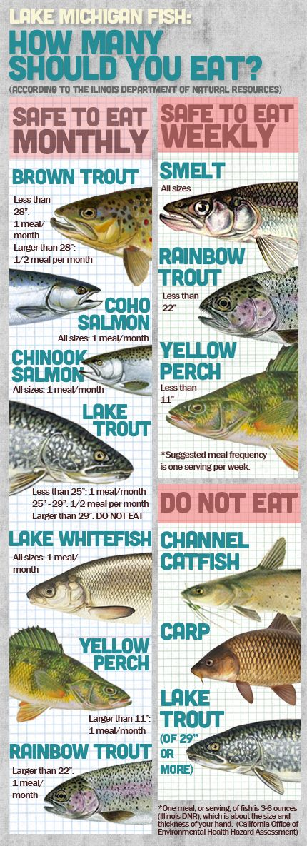 Lake Michigan Fish safety. Click to download a printable version. (Graphic by Logan Jaffe/WBEZ)