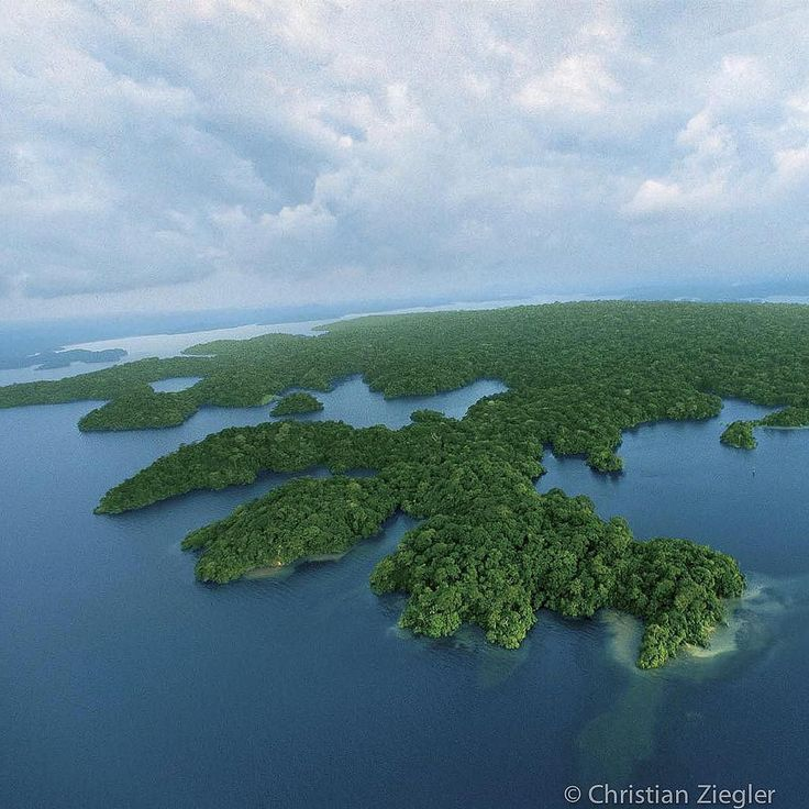 Photograph taken by @christianziegler . Green amoeba. Barro Colorado Island…